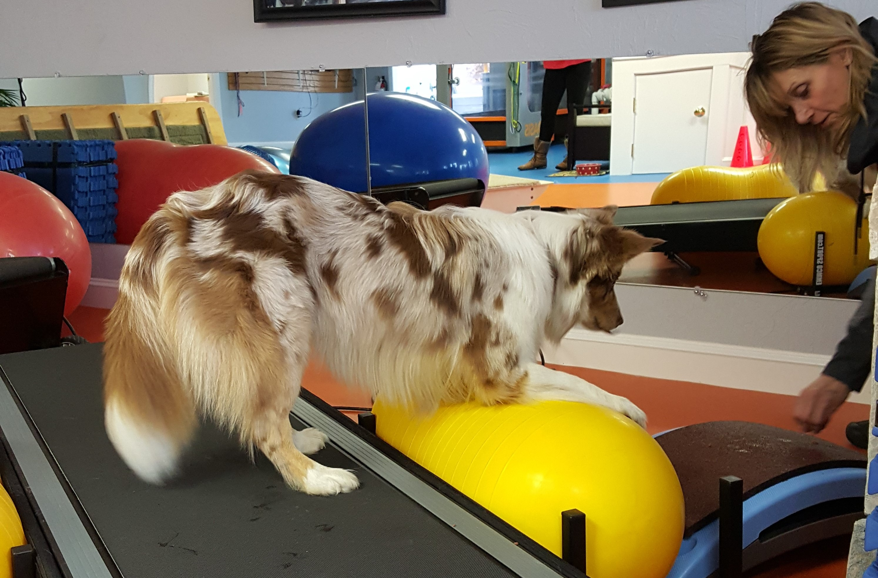 Canine physical therapy - Should You Take Your Dog To Rehab