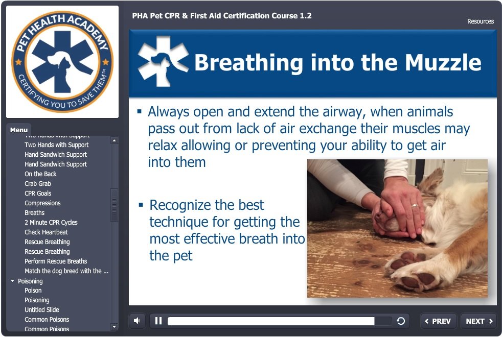 pet first aid class and pet cpr certification online