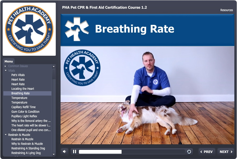 Pet Cpr 1st Aid Certification Course Pet Health Academy