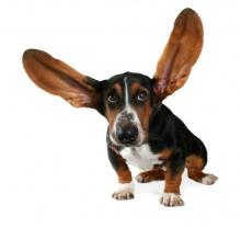 ear infections and pet first aid