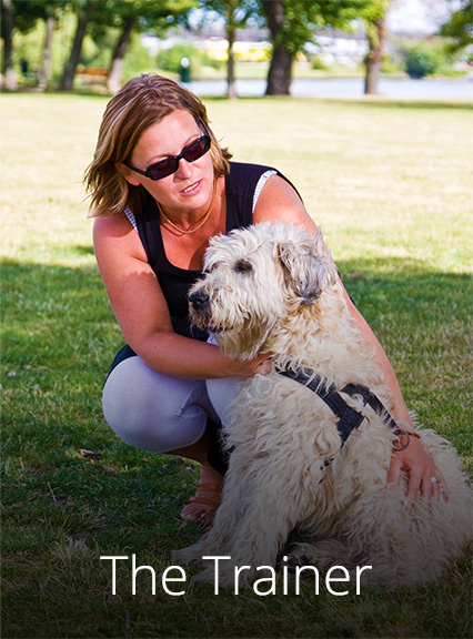 pet first aid class and pet cpr certification
