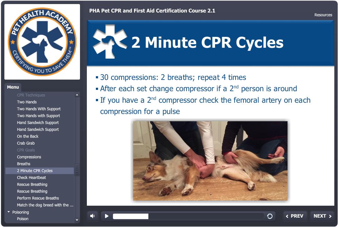 Pet Cpr 1st Aid Certification Course Pet Health Academy